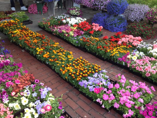 Annuals can help bring color to a garden for five months.
