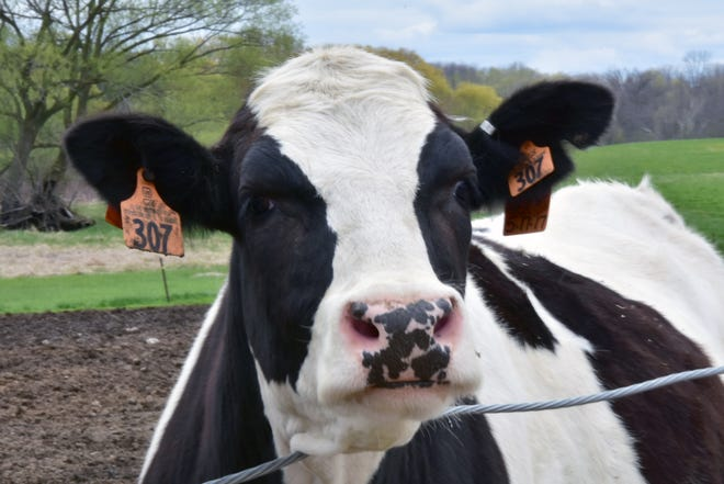 Every June, communities across the state come together for a month-long celebration of Wisconsin's dairy industry.