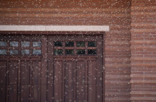 Lake flies swarm around a house on Limekiln Drive in the Town of Neenah.