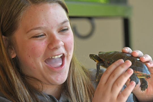 Isabella Jeffrey, a seventh grader at St. Joseph Catholic School in Crestline, enjoys holding a painted turtle Tuesday during a field trip to the Lowe-Volk Nature Center.