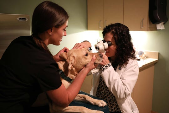 Service dogs receive free eye exams through BluePearl pet hospital in Southfield.