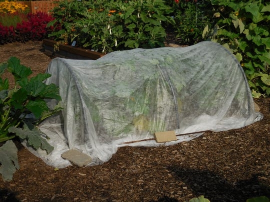 A row cover protects against squash vine borers and squash bugs at the Purdue Extension Marion County Demonstration Garden at the Indiana State Fairgrounds.