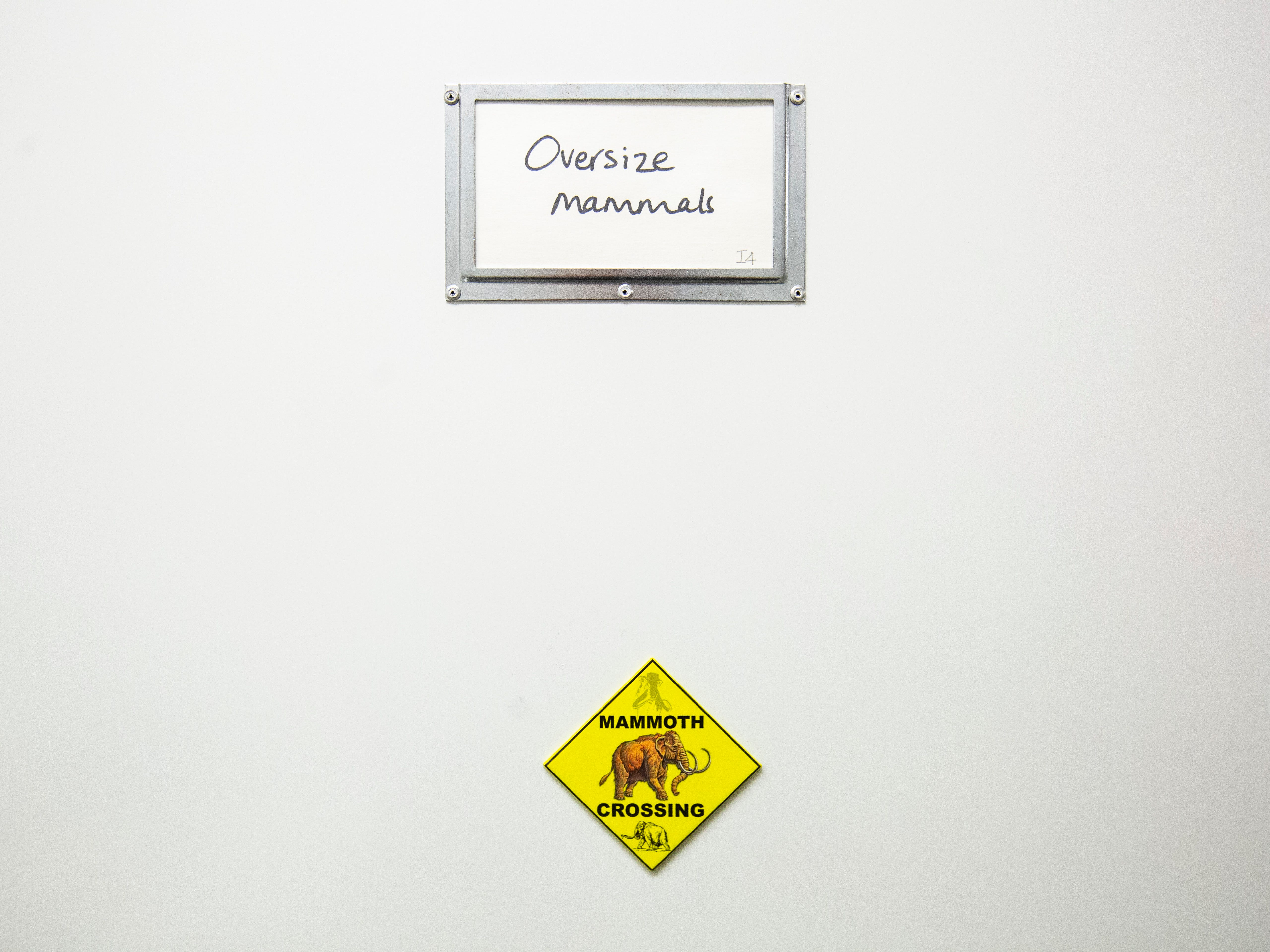 A cabinet of oversize mammal bones with a magnet warning of a mammoth crossing is pictured, Tuesday, May 14, 2019, at the University of Iowa Paleontology Repository on the University of Iowa campus in Iowa City, Iowa.