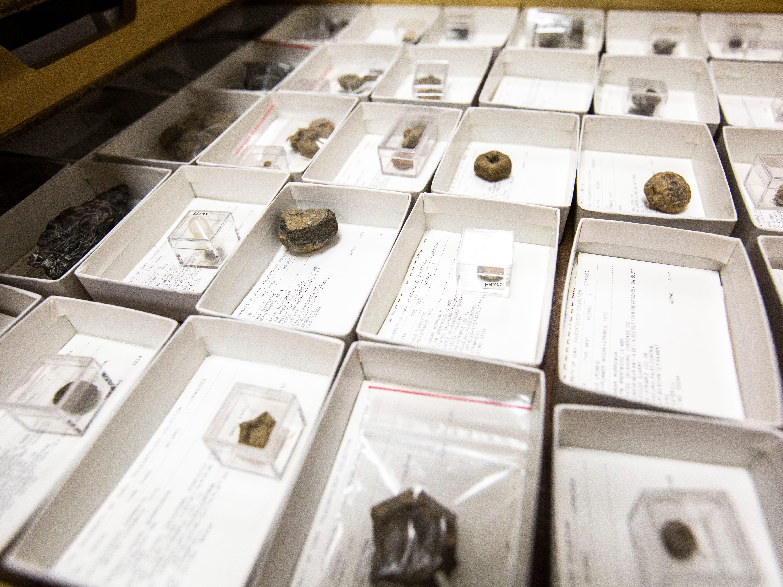 Fossils of crinoids marine animals are displayed, Tuesday, May 14, 2019, at the University of Iowa Paleontology Repository on the University of Iowa campus in Iowa City, Iowa.