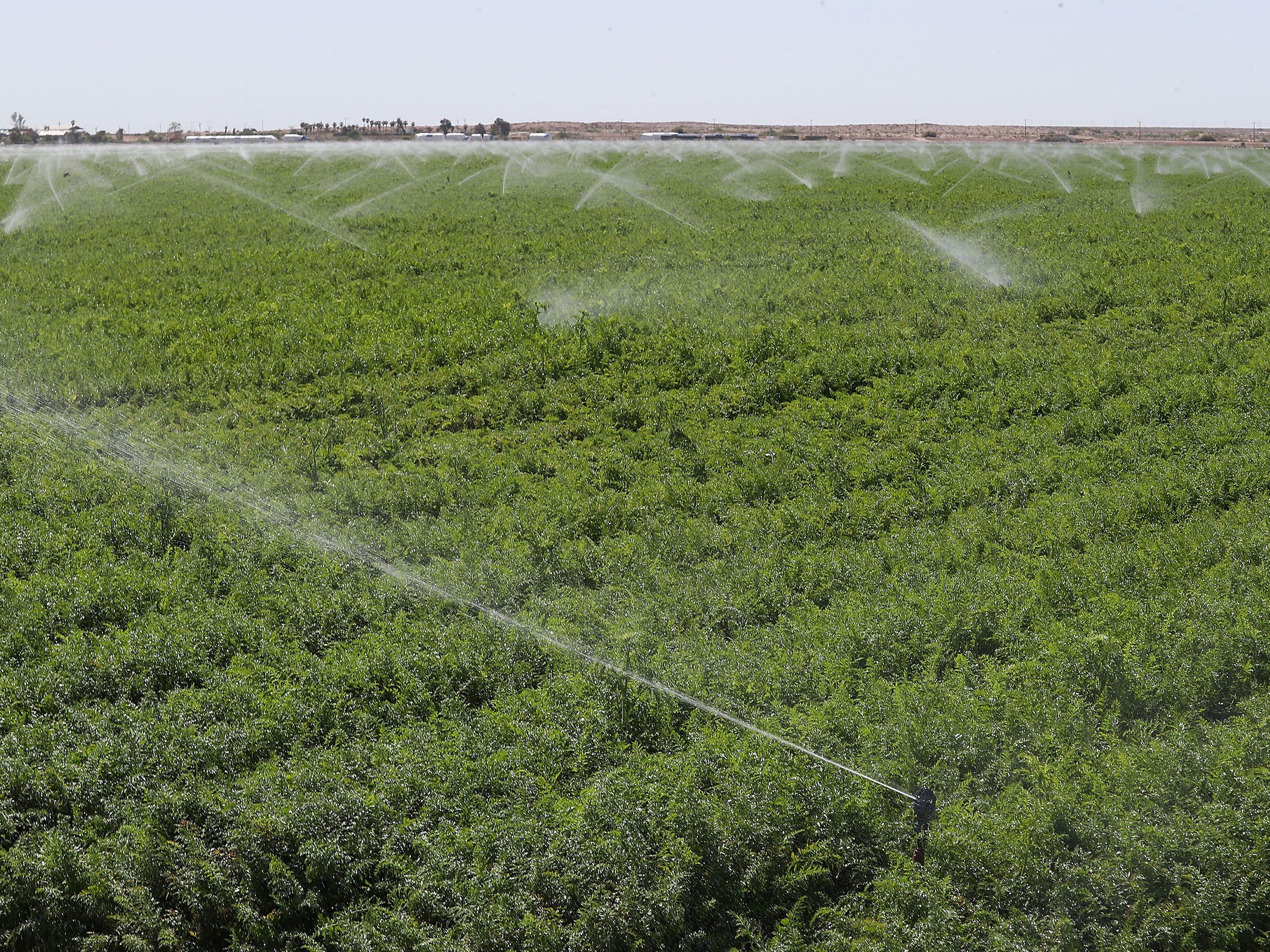 Farm land is irrigated on the Elmore Desert Ranch which abuts the Salton Sea near Brawley, April 11, 2019.