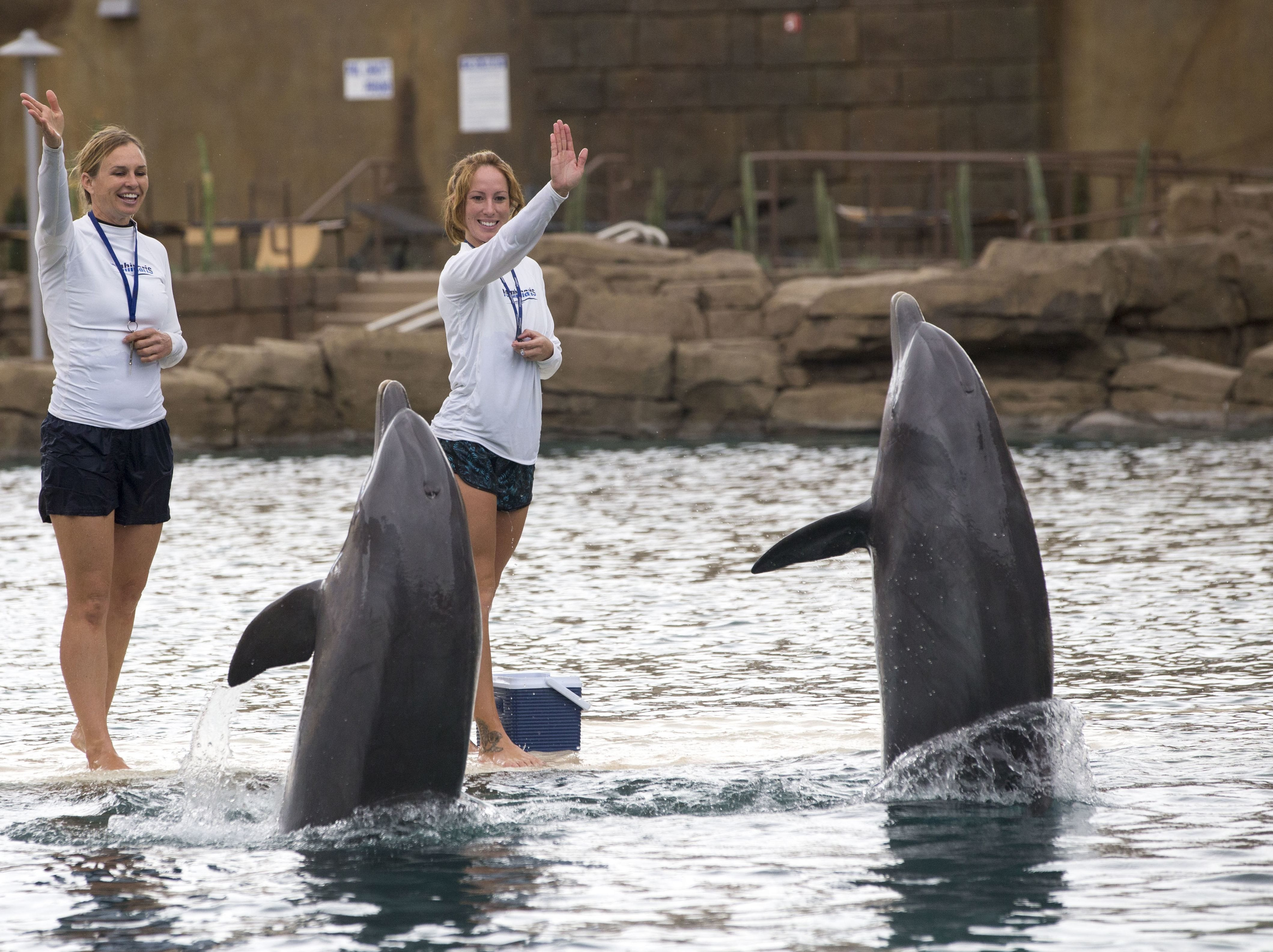 Khloe, an 11-year-old Atlantic bottlenose dolphin, died on Dec. 30, 2018, after a chronic illness.