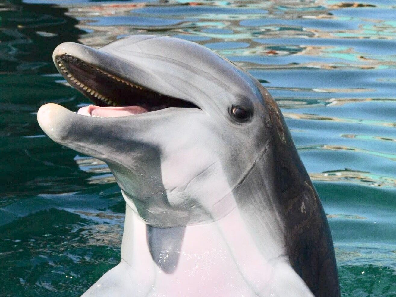 """Alia, a 10-year-old bottlenose dolphin, died May 22, 2018, of an acute bacterial infection that officials said """"spread quickly throughout her body."""""""
