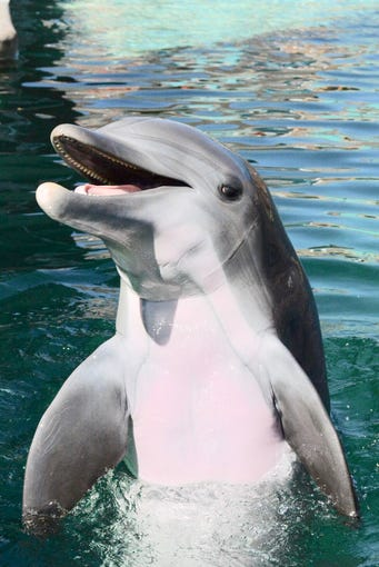 "Alia, a 10-year-old bottlenose dolphin, died May 22, 2018, of an acute bacterial infection that officials said ""spread quickly throughout her body."""