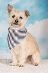 Gizmo is available for adoption at Friends for Life's adoption center. For more information, call 480-497-8296 or email FFLdogs@azfriends.org.