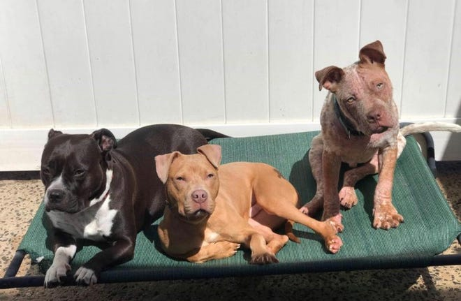 Arnold (on the right) has playtime with his his two buddies.