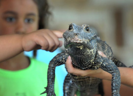 Parents and kids got a hands-on experience Tuesday morning when the Dallas Zoo brought several critters to the River Bend Nature Center.