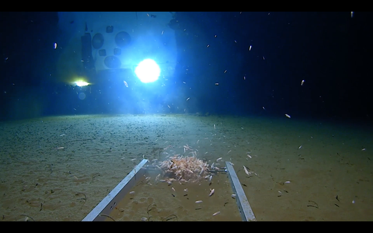 Undersea explorer Victor Vescovo said he saw a plastic bag and candy wrappers at the deepest place on Earth.