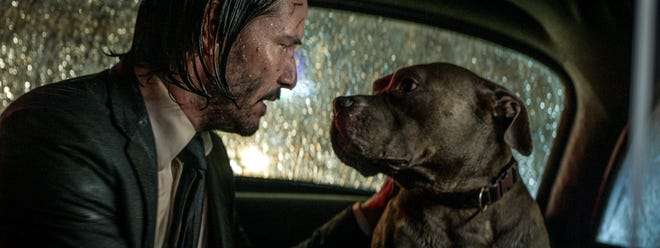 """Even with a heap of assassins after him, John Wick (Keanu Reeves) looks out for his loyal pitbull pal in """"John Wick: Chapter 3 – Parabellum."""""""
