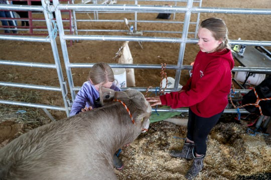 Esme Rye, 10, right, and her sister Roy Rye, 8, right, pet and say goodbye to the steer Esme raised for over a year, Cupid, at the 69th annual Clarksville Area Junior Better Beef Show at the John Bartee Agricultural Center in Clarksville, Tenn., on Tuesday, May 14, 2019.