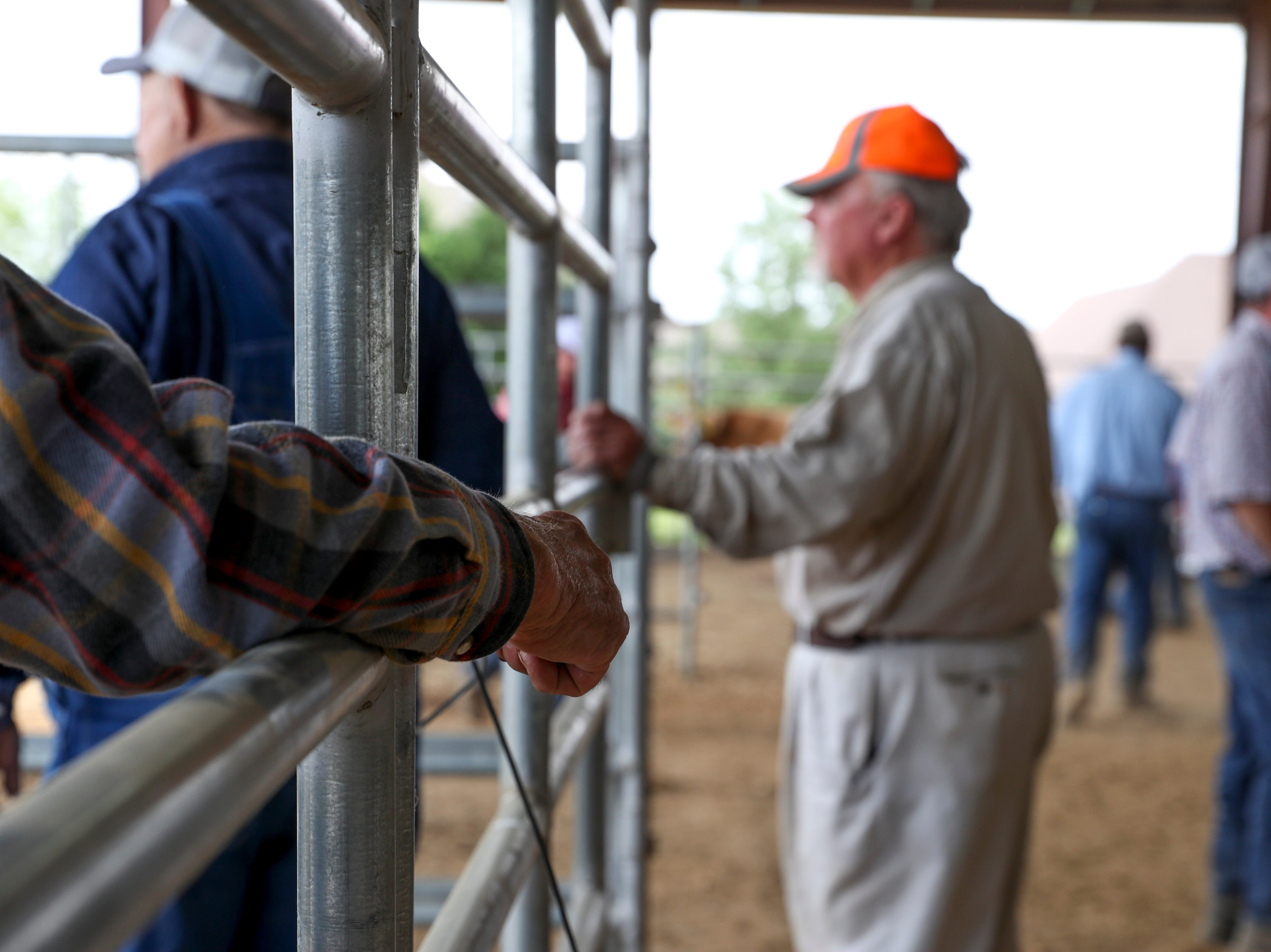 A farmer leans against railing and leaves one arm dangling outside the fence while watching steer be directed towards their trailer at the 69th annual Clarksville Area Junior Better Beef Show at the John Bartee Agricultural Center in Clarksville, Tenn., on Tuesday, May 14, 2019.