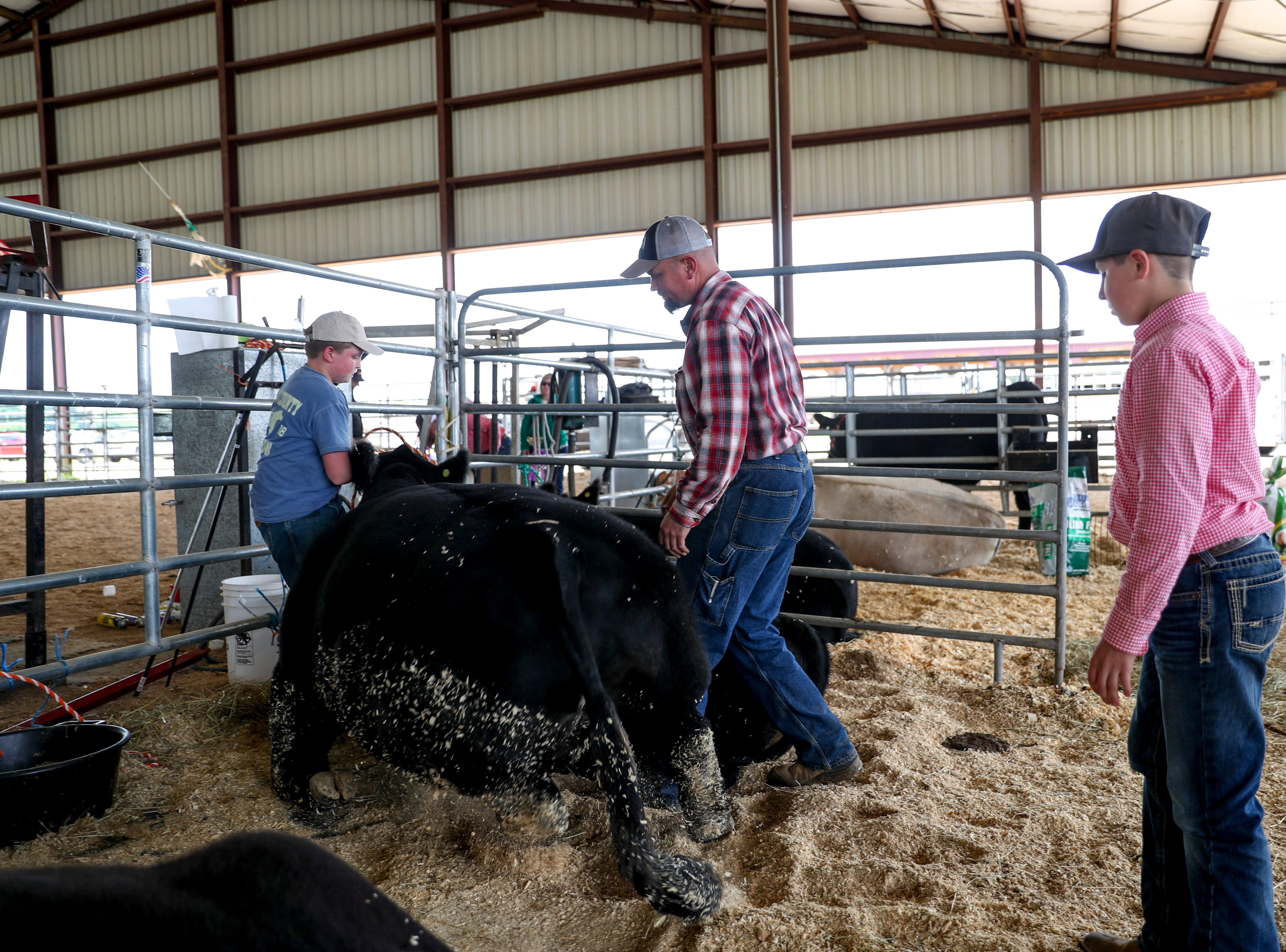 Hands encourage Boomer, the Grand Champion raised by Augustus Rye at the 69th annual Clarksville Area Junior Better Beef Show at the John Bartee Agricultural Center in Clarksville, Tenn., on Tuesday, May 14, 2019.