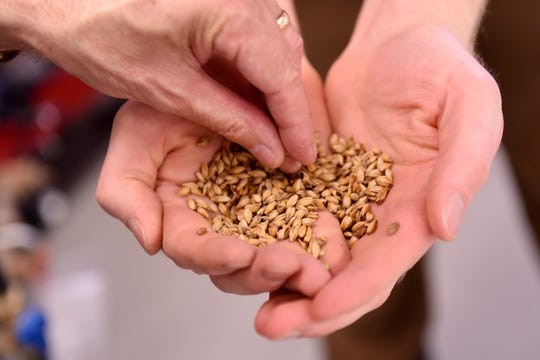 Eagle-Gazette reporter Jeff Barron investigates different types of grain used in the brewing process.