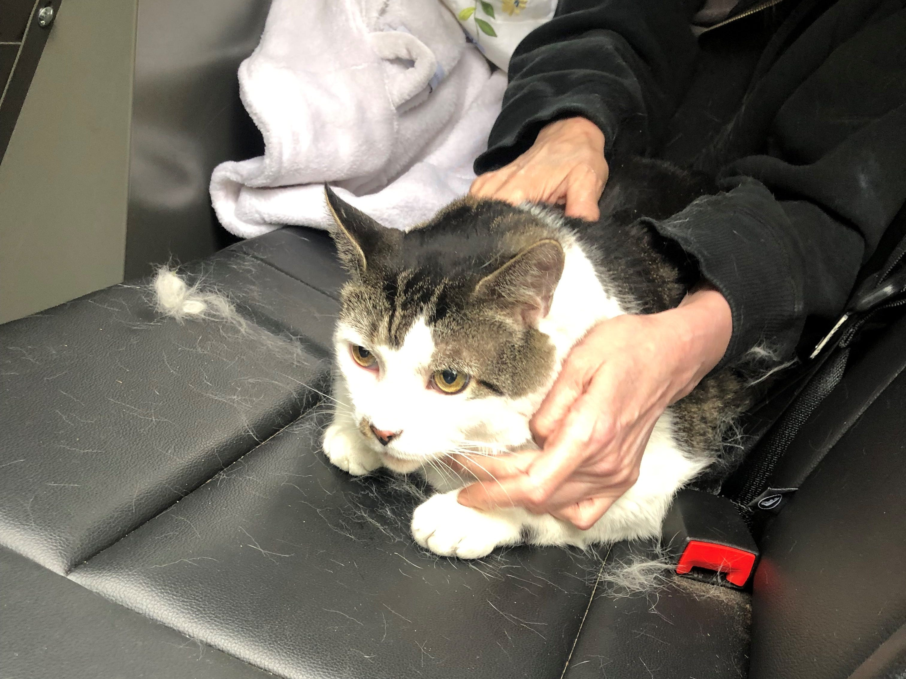 A cat rescued from a fire in Saddle Brook May 14, 2019.