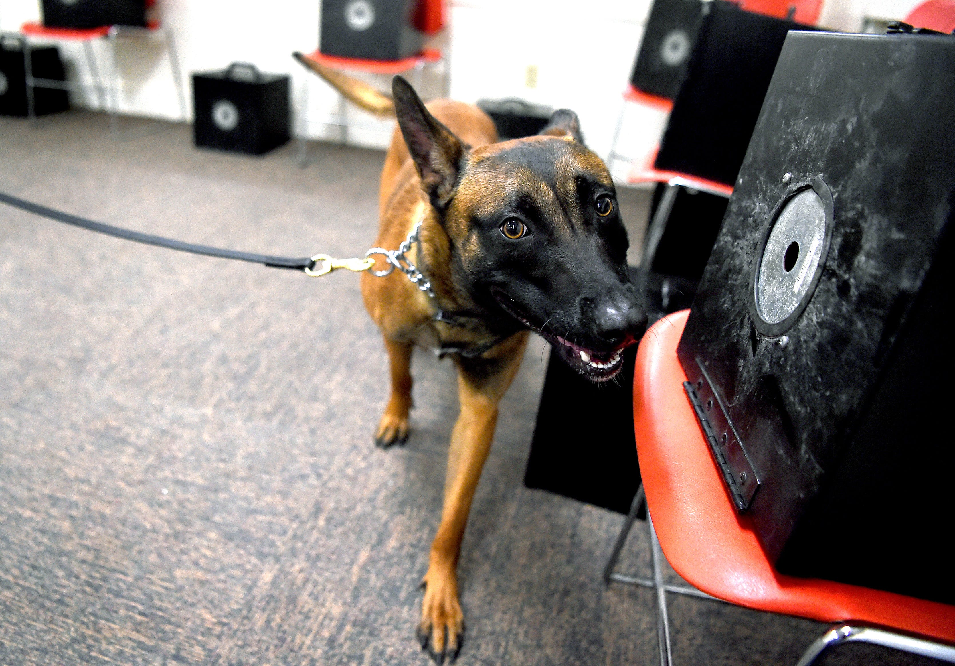 Hundreds of drug dogs could face an uncertain fate if marijuana is legalized in New York