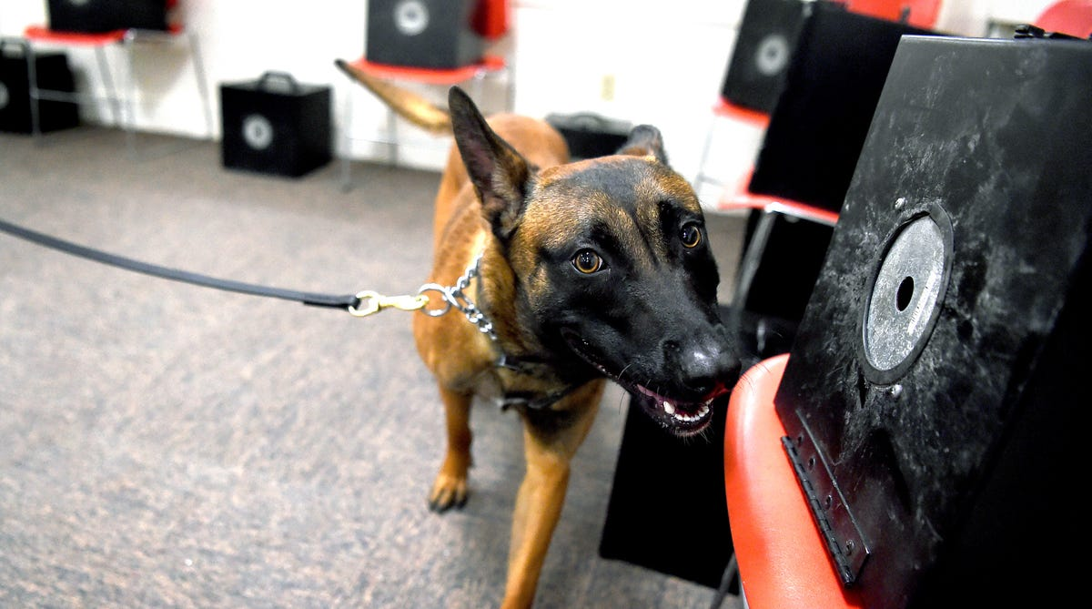 Drug Dogs Face Uncertainty If Marijuana Is Legalized In New York