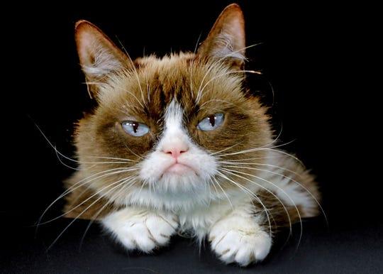 Grumpy Cat in Los Angeles in 2015.