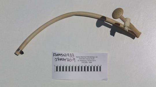 Scientists found this hose, nozzle and radiator clamp inside a male dolphin stranded on Fort Myers Beach.