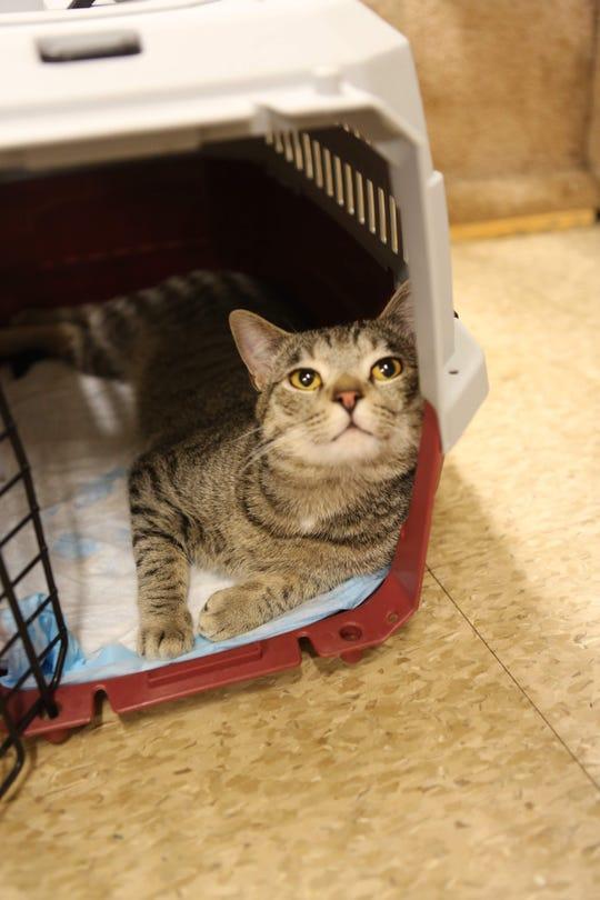 Solomon sits in his cat carrier in Trenton, TN.