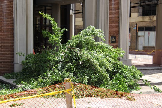 Parts of a tree sit May 16, 2019, on Market Street after being removed for sidewalk improvements. A total of eight trees were removed.