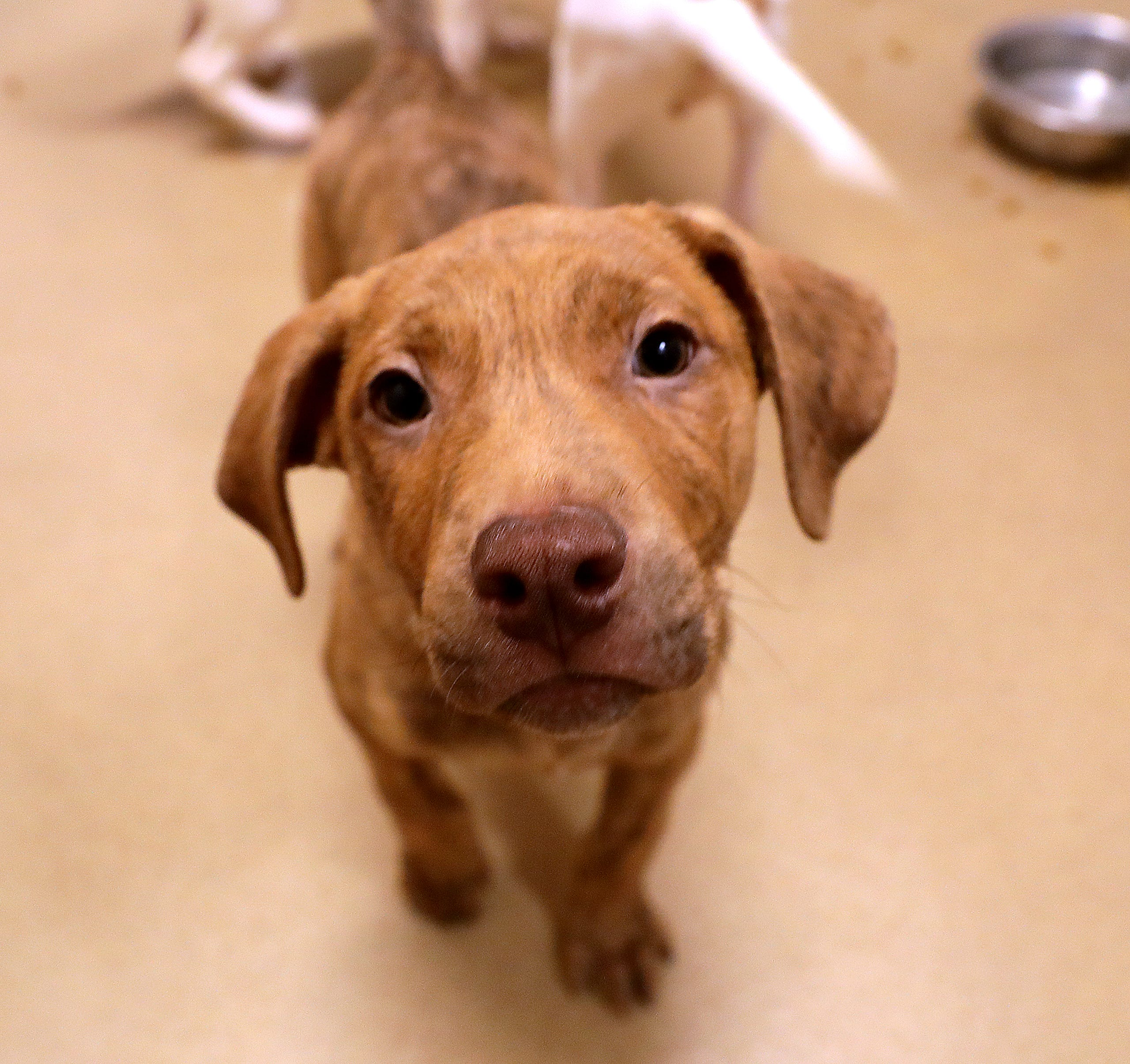 13 cute photos of a litter of puppies at the Wisconsin