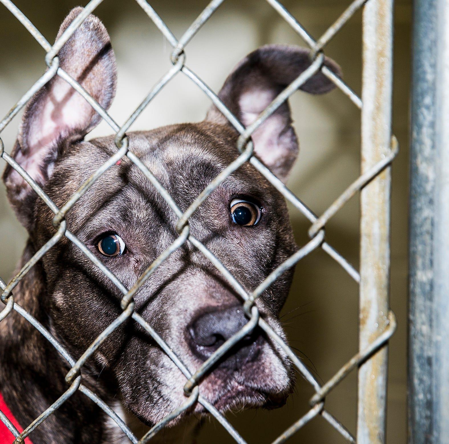Muncie animal shelter reducing adoption fees during 'Spring Extravaganza' promotion