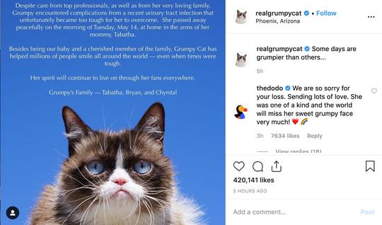 Screenshot of Grumpy Cat's Instagram announcement