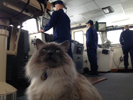 Casca sits inside the USCG Cutter Neah Bay during ice breaking operations on the St. Clair River Wednesday. Casca was rescued by Neah Bay Commanding Officer Molly Waters during a stint in Alaska.