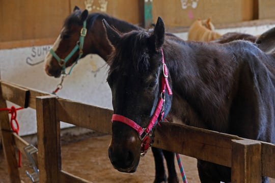 Sunrise Therapeutic Riding Center has 11 horses, but three have been retired from service.