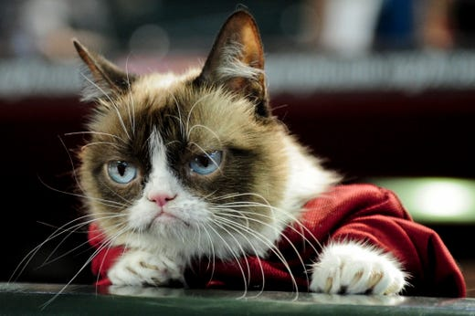 Sep 7, 2015; Phoenix, AZ, USA; Internet personality Grumpy Cat  looks on prior to the game between the Arizona Diamondbacks and the San Francisco Giants at Chase Field. Mandatory Credit: Matt Kartozian-USA TODAY Sports ORG XMIT: USATSI-217468 ORIG FILE ID:  20150907_kkt_ak4_316.jpg