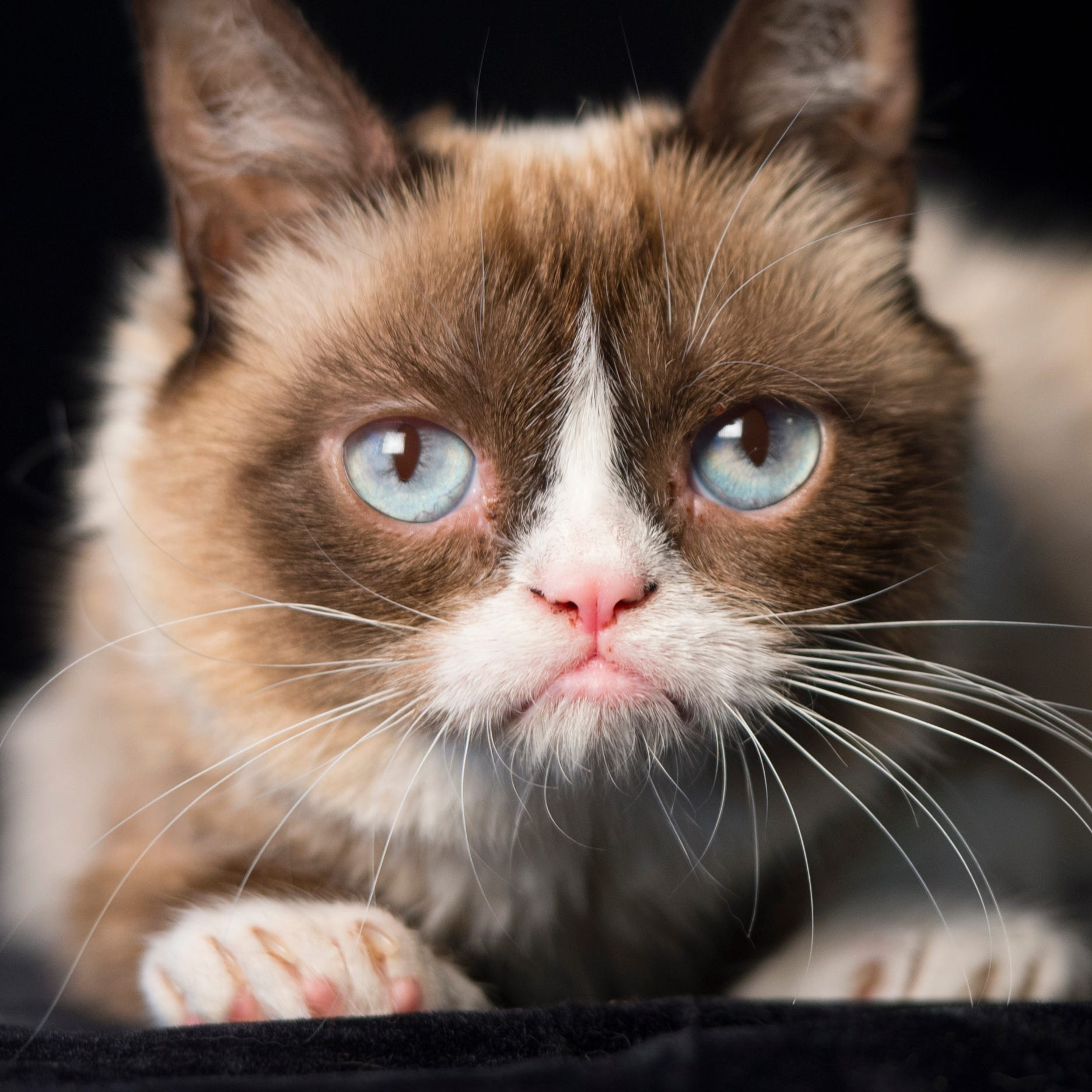 8/7/14 11:31:41 AM -- New York, NY, U.S.A  -- Grumpy Cat - online and publishing feline phenom., --    Photo by Robert Deutsch, USA TODAY Staff ORG XMIT:  RD 131498 GRUMPY CAT 8/7/2014 [Via MerlinFTP Drop]