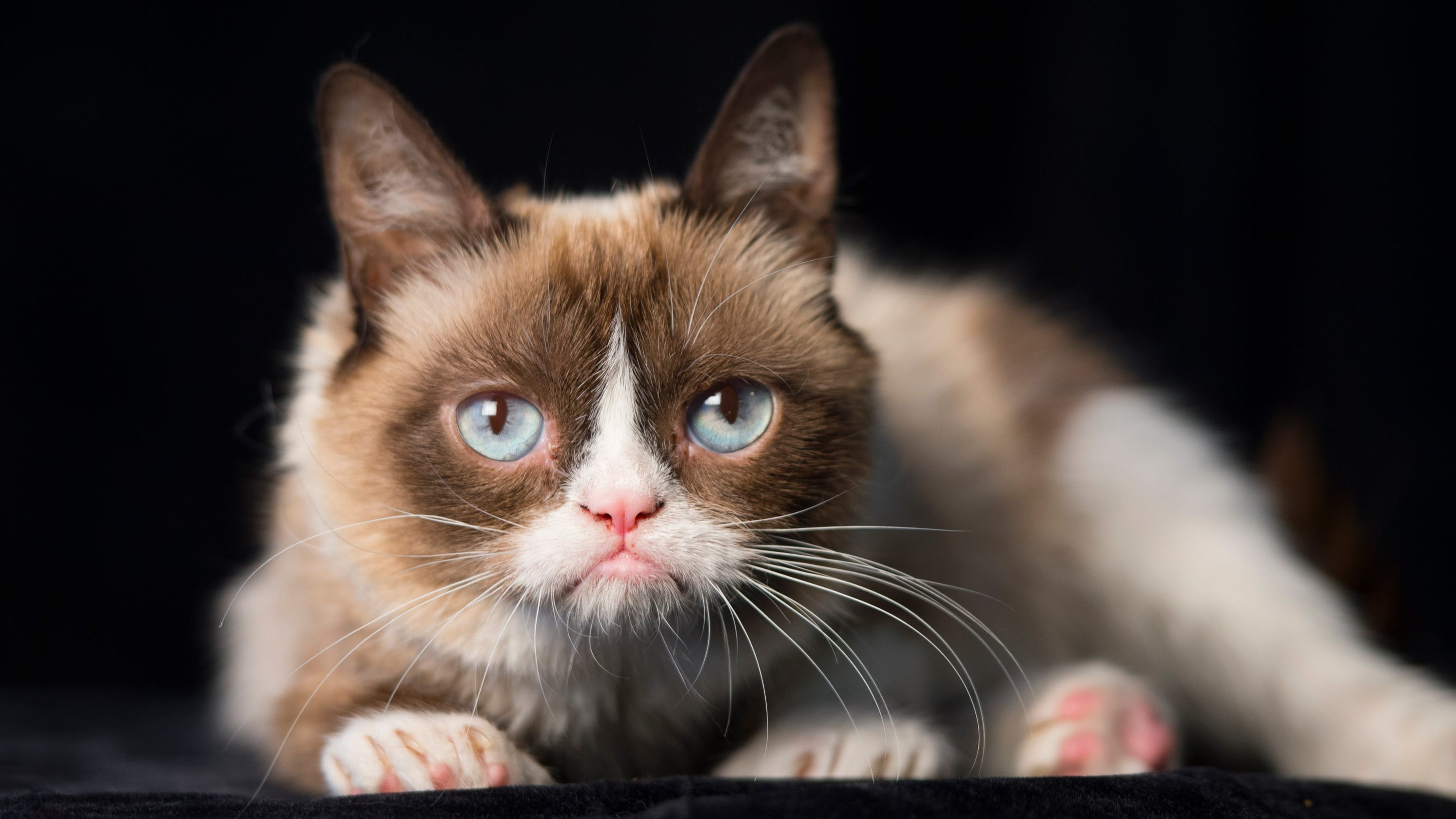 Grumpy Cat: A look back at the internet star's best memes