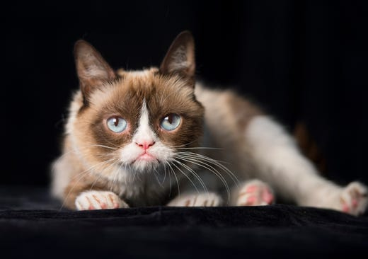8/7/14 11:31:41 AM -- New York, NY, U.S.A  -- Grumpy Cat - online and publishing feline phenom., --    Photo by Robert Deutsch, USA TODAY Staff ORG XMIT:  RD 131498 GRUMPY CAT 8/7/2014 [Via MerlinFTP Drop]
