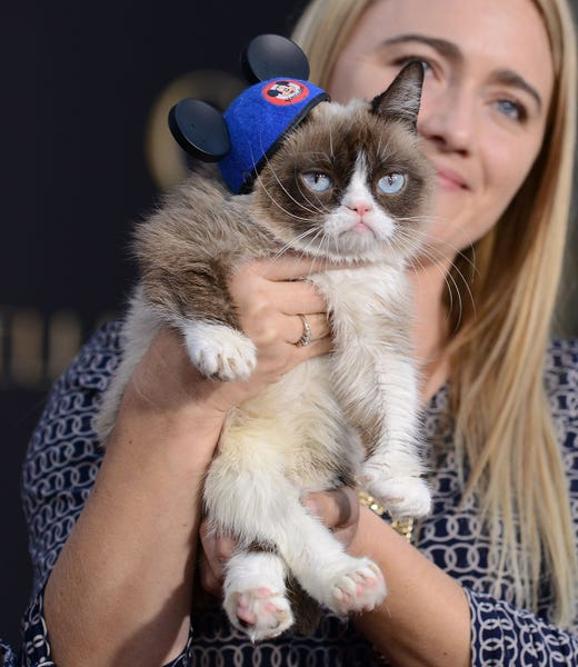 """HOLLYWOOD, CA - MARCH 01:  Grumpy Cat attends the premiere of """"Cinderella"""" at the El Capitan Theatre on March 1, 2015 in Hollywood, California.  (Photo by Jason LaVeris/FilmMagic) ORG XMIT: 538643551 ORIG FILE ID: 464919104"""