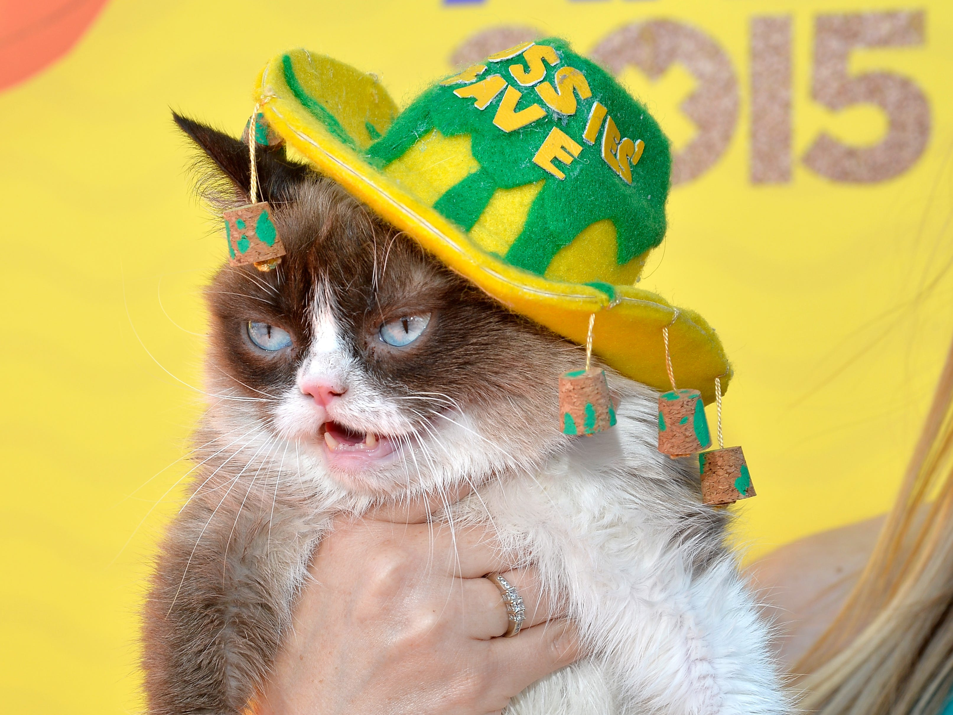 INGLEWOOD, CA - MARCH 28:  Grumpy Cat attends Nickelodeon's 28th Annual Kids' Choice Awards held at The Forum on March 28, 2015 in Inglewood, California.  (Photo by Lester Cohen/WireImage) ORG XMIT: 543522063 ORIG FILE ID: 467944750