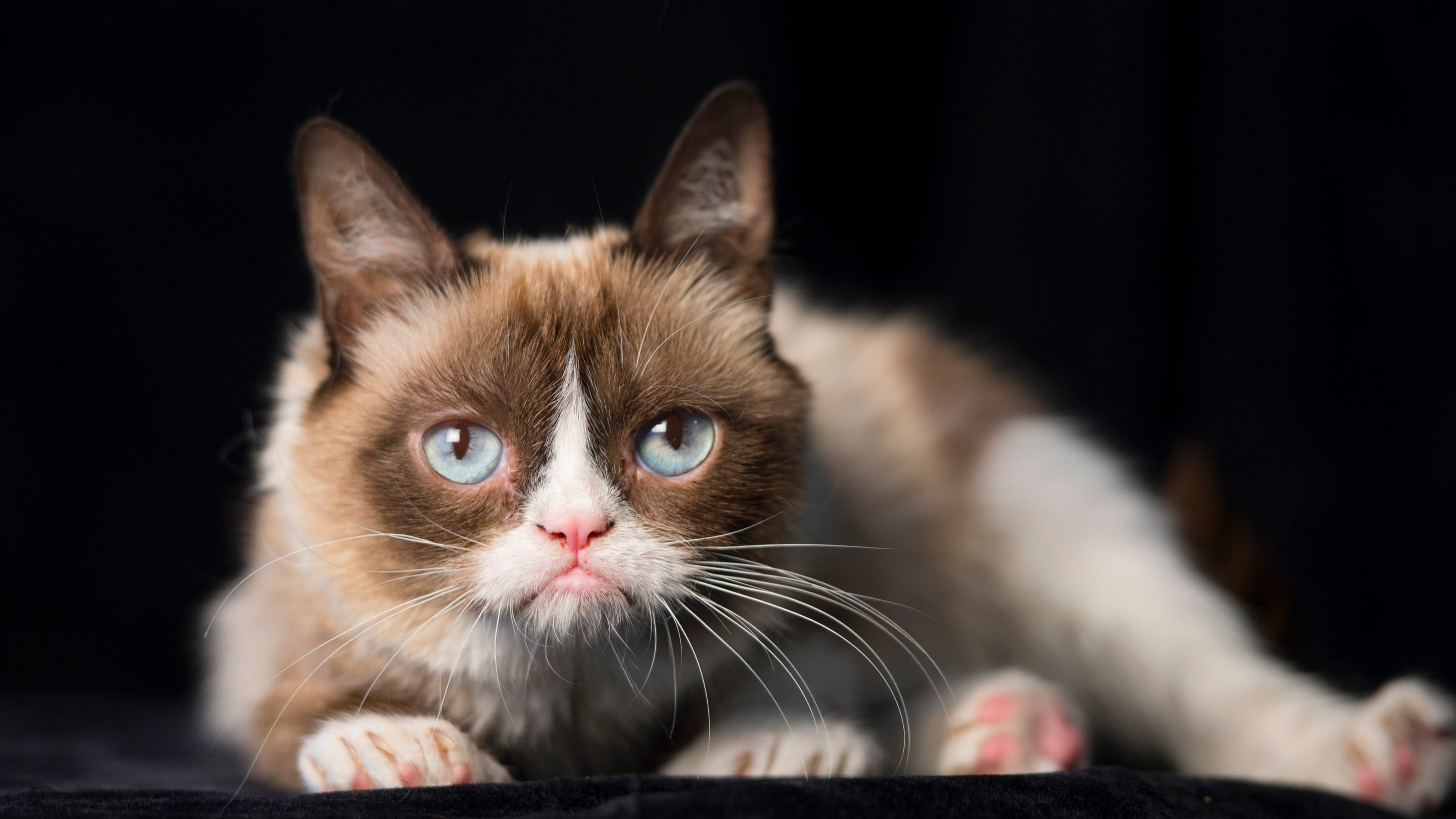 Grumpy Cat, Beloved Internet Meme Star, Dies At Age 7