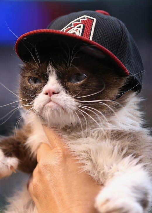 PHOENIX, AZ - APRIL 04:  'Grumpy Cat' on the field before the MLB opening day game between the Colorado Rockies and the Arizona Diamondbacks at Chase Field on April 4, 2016 in Phoenix, Arizona.  (Photo by Christian Petersen/Getty Images) ORG XMIT: 607674675 ORIG FILE ID: 519178494