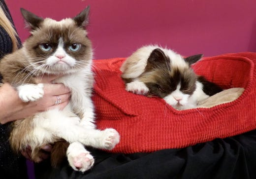 epa07577915 (FILE) - Grumpy Cat is held by his owner Tabatha Bundesen (out of frame) next to a red basket in which sits a new replica of him (R) made of fiberglass, silicon, and fake hair, at Madame Tussauds wax museum in San Francisco, California, USA, 08 December 2015 (reissued 17 May 2019). The internet celebrity cat from Arizona, USA -- named Tardar Sauce and commonly known as Grumpy Cat for his facial appearance -- has died aged seven on 14 May 2019 following health complications, media reported.  EPA-EFE/BARBARAMUNKER  GERMANY OUT