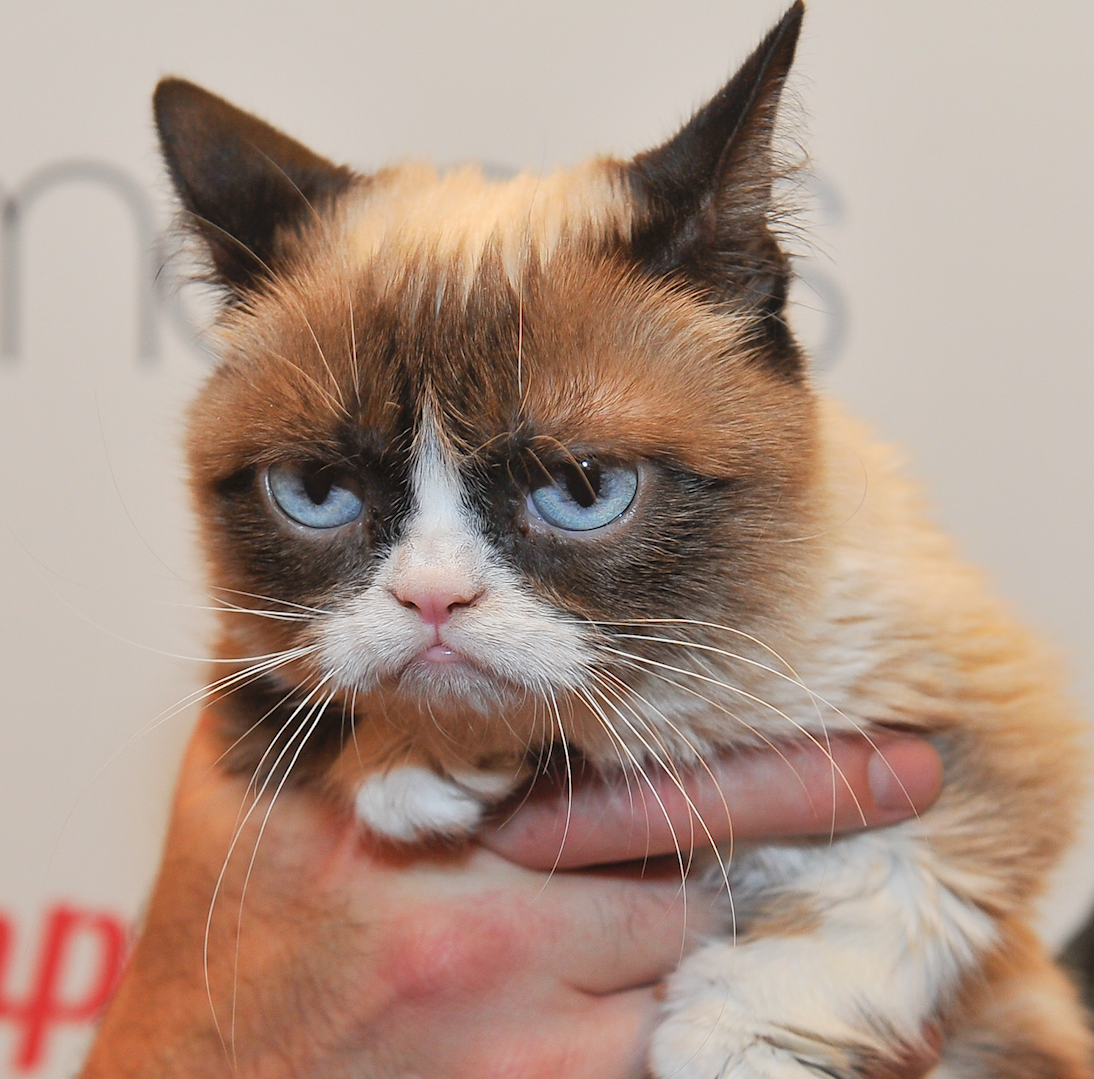 Grumpy Cat, meme star and an internet sensation, dies at age 7
