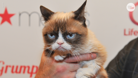 Grumpy Cat lives forever on the internet. These were some of her best memes