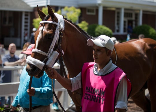 Maximum Security greets fans in the paddock prior to the fifth race at Monmouth Park. Trainer Jason Servis accompanied the horse to greet fans who showed support after Maximum Security was disqualified in the Kentucky Derby.