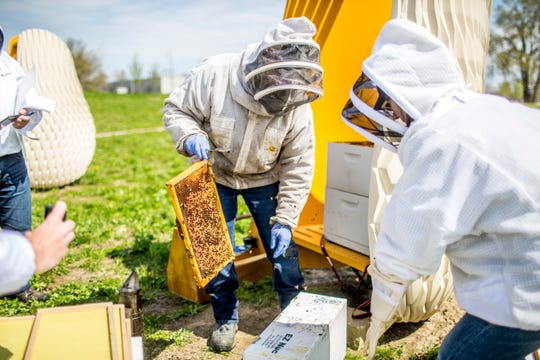 Hives installed at Ford World Headquarters in Dearborn getting split in preparation for transfer to Ford's Cherry Hill Farm in Ypsilanti, a move marking the company's partnership with the veterans program Heroes to Hives.