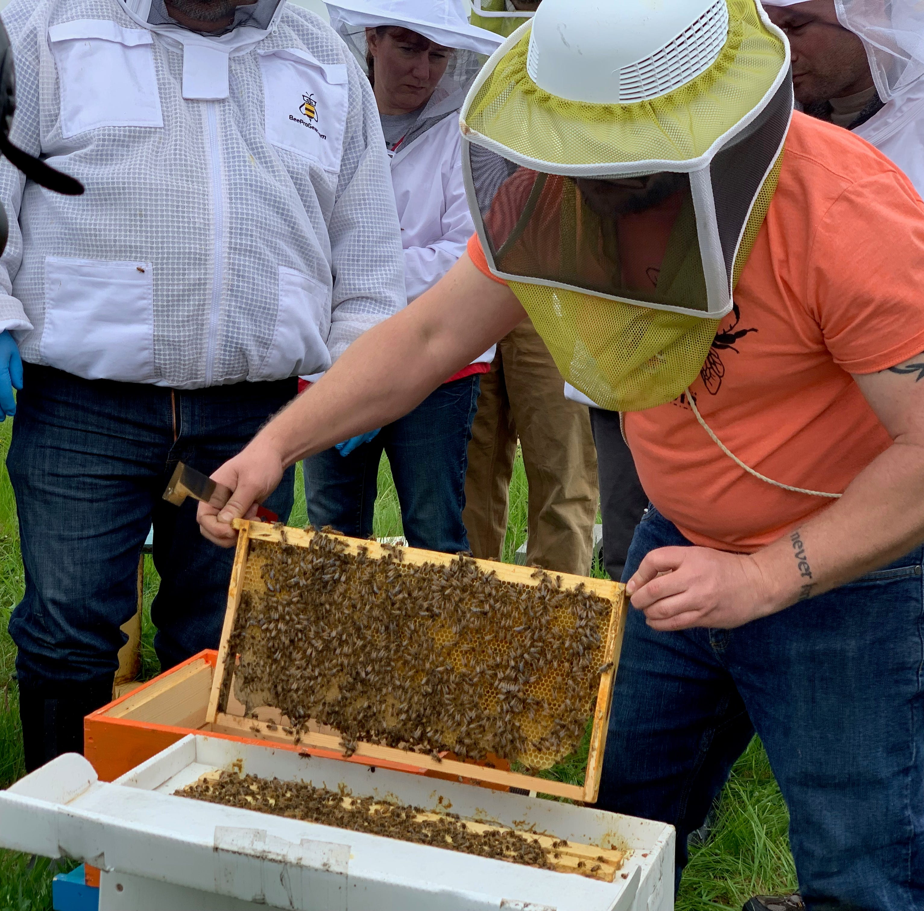 Ford Motor Co., veterans partner to save honeybees at Ypsilanti farm