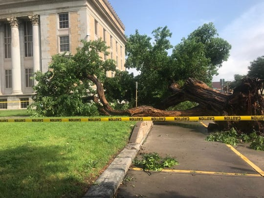 A 137-year-old bois d'arc, which has stood sentinel outside the Tom Green County Courthouse, was toppled by strong winds in the early morning hours of May 18, 2019, in San Angelo.