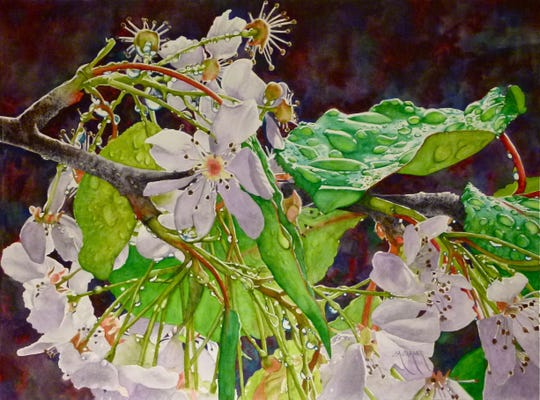 Ornamental pear by Linda Shaner is on display at the San Buenaventura Art Association gallery. The work earned first place in the art association's eighth watercolor competition.