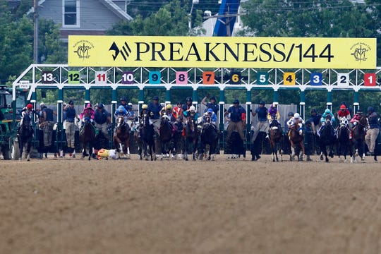 John Velazquez tumbles to the turf after falling off Bodexpress at the starting gate during the 144th Preakness Stakes.